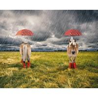 Tricot - Stenzo - paneel paard in de regen