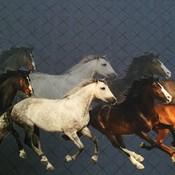 Tricot - Stenzo - Horses