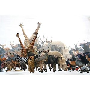 Tricot border - Wildlife