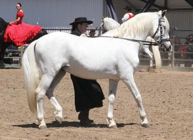 The Andalusian