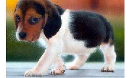 Welke brokjes krijgt jouw puppy?