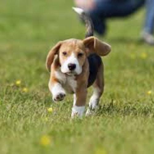Wandelen met je puppy
