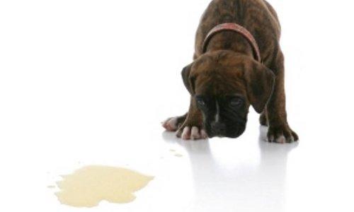 Eerste hulp bij puppyproblemen