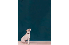 Wallpaint, Aubusson Blue: 2,5l - 100ml