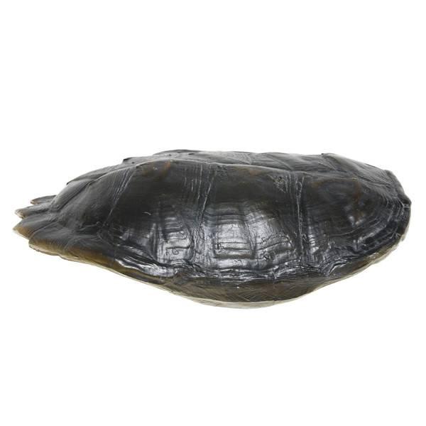 HKliving Schildpaddenschild zwart, 34 cm kunstmatig