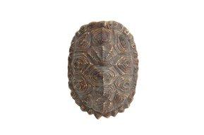 Schildpaddenschild groen/bruin, 27 cm kunstmatig