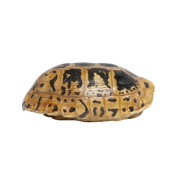 HKliving Schildpaddenschild geel/zwart, 20 cm kunstmatig