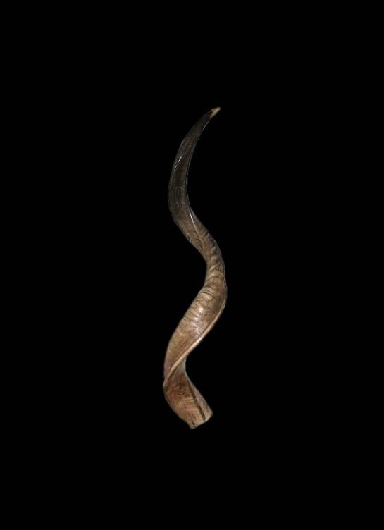 Kuduhorn teilgeschliffen