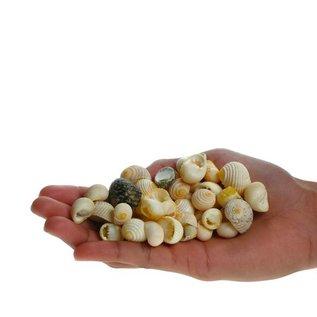 Assorted White Teeth, Nerita