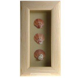 Triple Shell in a White Box Frame