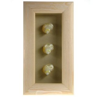 Triple Shell in a White Box Frame  10x4 inches, Goldmouth Turbo, 1