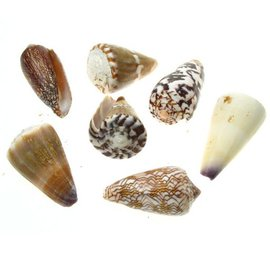 Assorted Cones 5cm x1