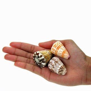 Assorted Cones 2-3cm x10