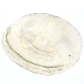 Large Capiz Shell 10cm