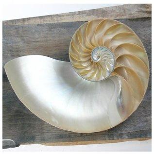 Nautilus Chambered Sidecut.