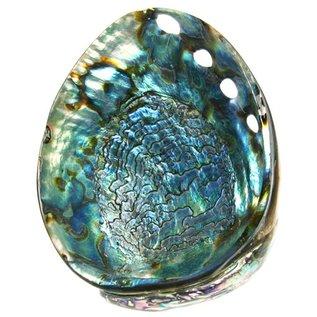 Polished Blue Abalone 14-16cm