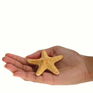 Jungle Starfish 5cm
