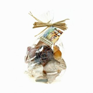 Assorted Shells in a Gift Bag