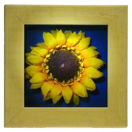 """Sunflower Picture 6X6X1"""""""