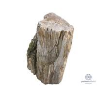 thumb-Grafsteen versteend hout-1