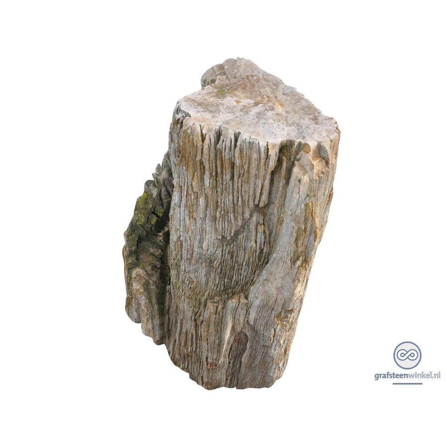 Grafsteen versteend hout-1