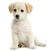 Speciale artikelen voor de pup