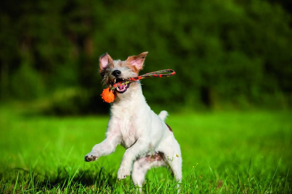 Apporteerspeelgoed voor honden