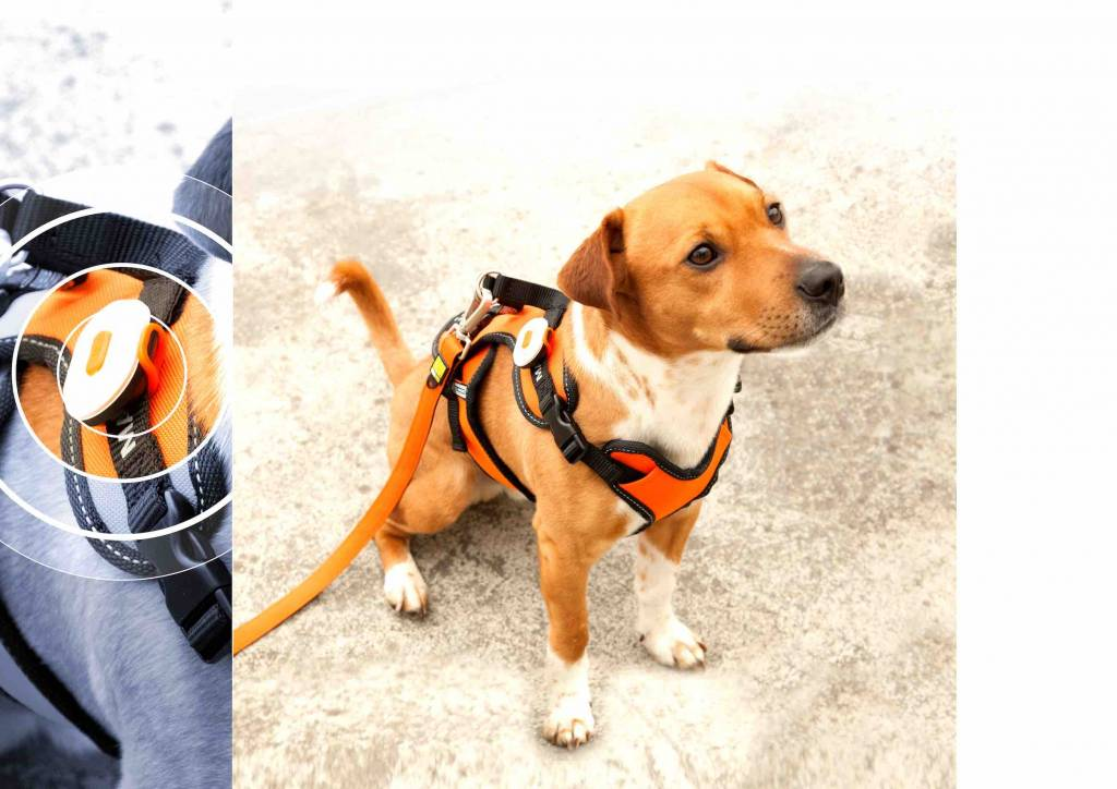 max molly honden veiligheids verlichting matrix ultra led