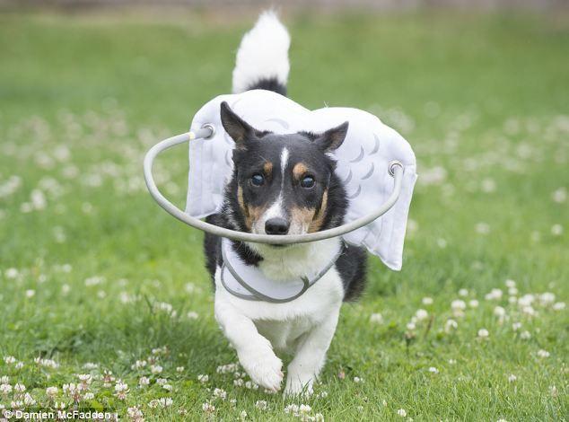 Muffin S Halo Blind Dog Speciaal Voor Blinde Honden