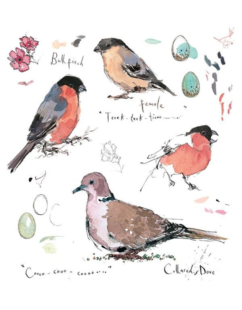 Sketchbook - Bullfinch & Collared Dove