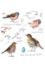 Sketchbook - Chaffinch & Song Thrush