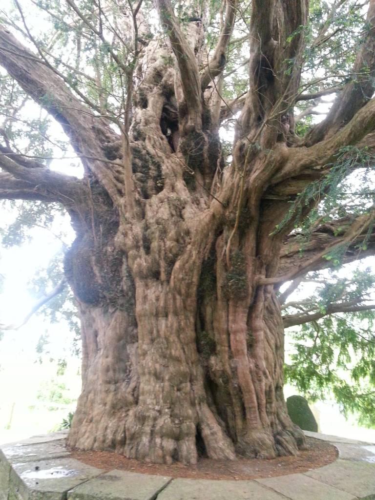 Seelenbaum Botschaft