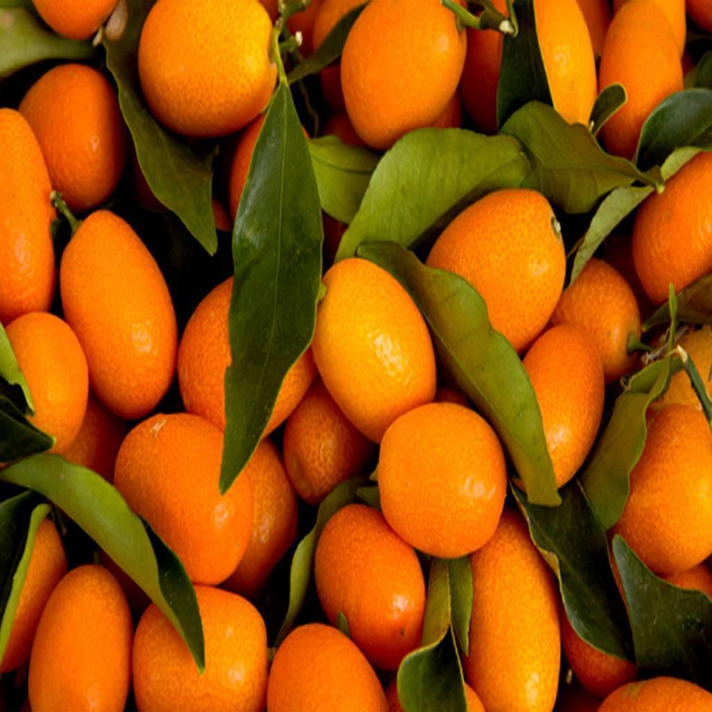 - Kumquat - Fruit syrup