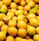 - Lemon - Fruchtsirup
