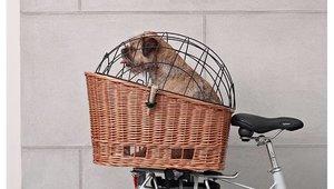 Actievoorwaarden Basil maart actie - like en win een Basil dierenfietsmand