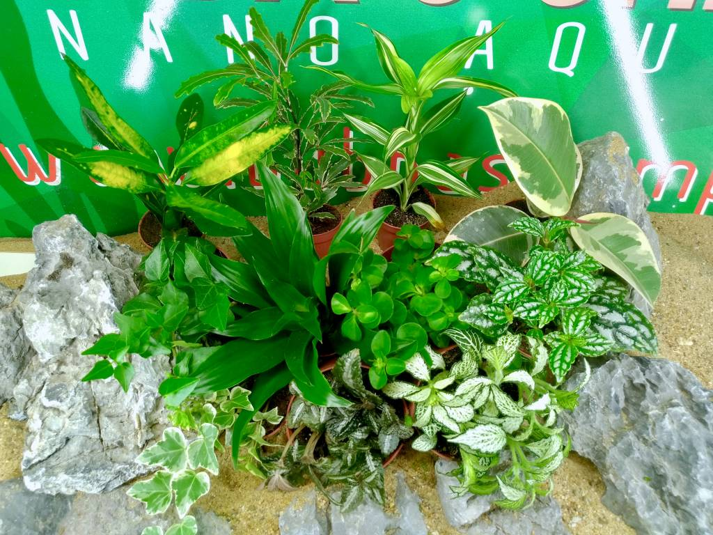 Bubba\'s Plants Plantes interieur - Bubba\'s Shrimps - Nano Aquariums