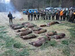 2 daagse drijfjacht Górowo Iławeckie