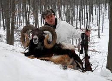 Muflon hunting in Poland