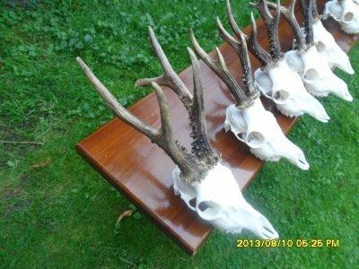 Bucks Hunting 2017 Iwawie