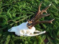 Bucks Hunting RANGER