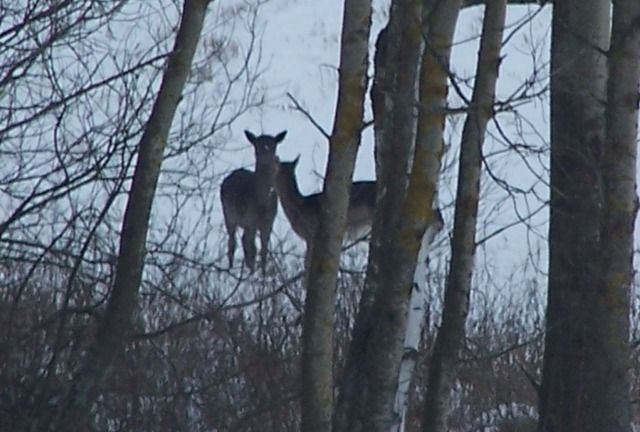 Bald Wild Hunt Poland