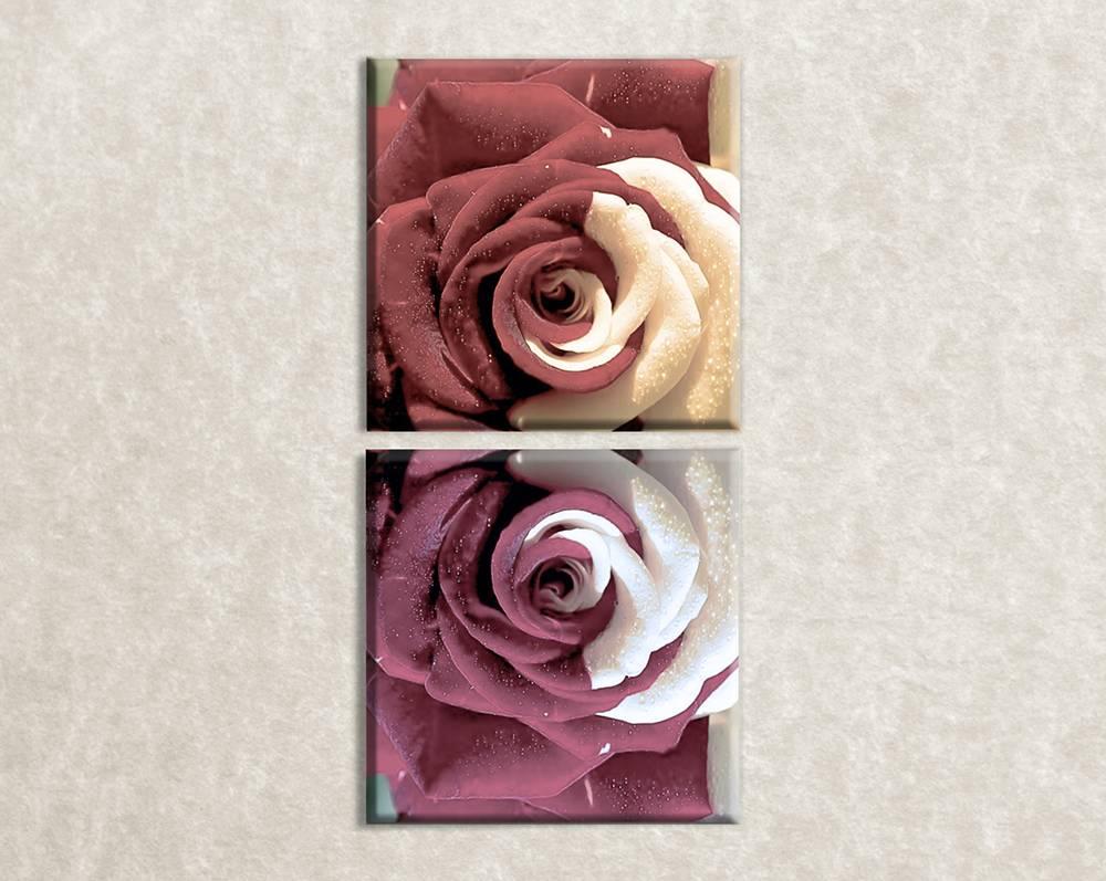 Foto op canvas Rose