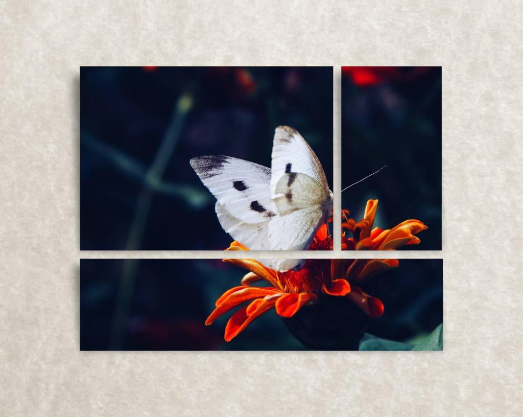 Foto op canvas Butterflies Closeu