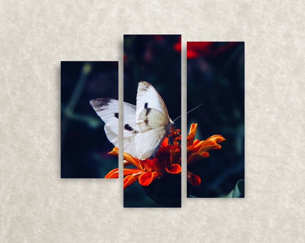 Canvas foto Butterflly