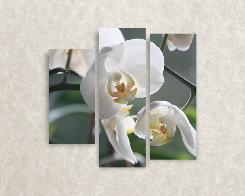 Canvas foto Orchid