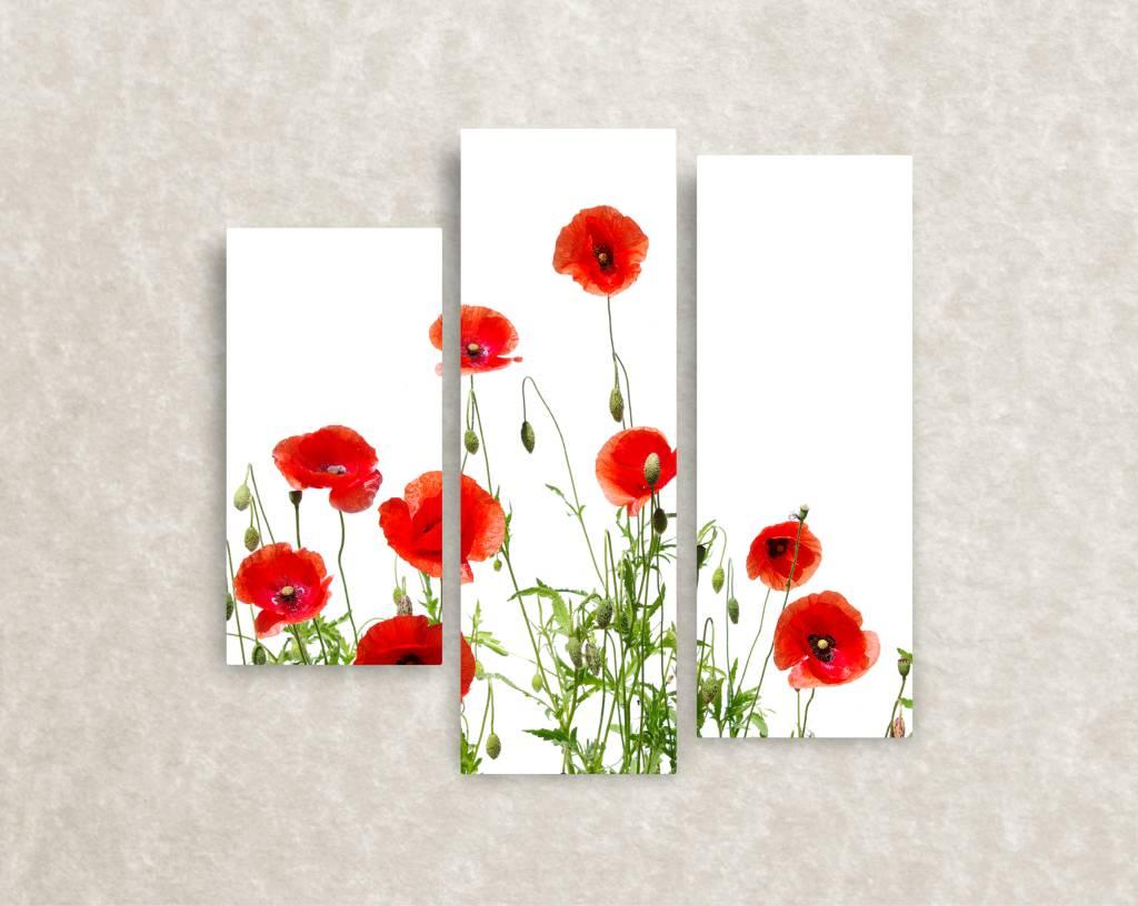 Foto op canvas Poppies Closeup