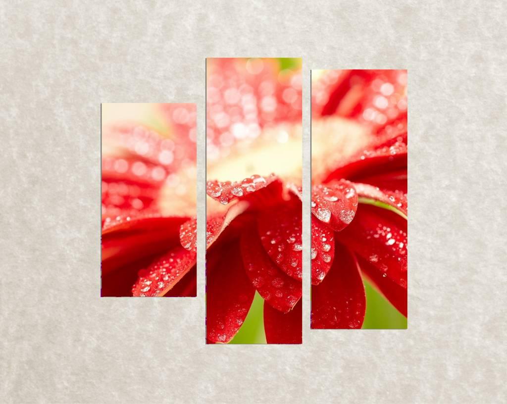Foto op canvas Red flower
