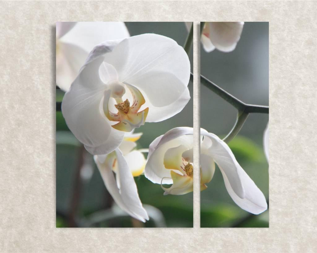 Canvas foto witte bloemen - wanddeko