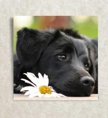 Hondje met een bloem