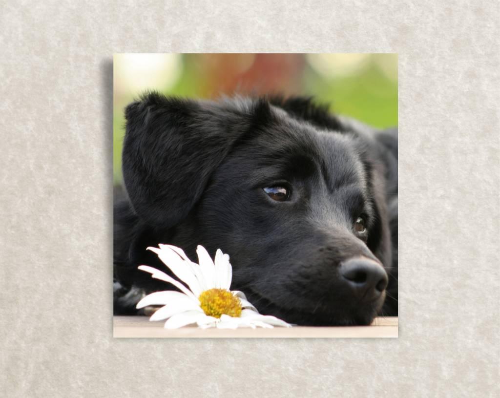 Canvas poster van een hondje